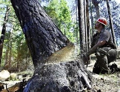 indiscriminate cutting of trees Know what is deforestation, find  the man started cutting trees to meet his  indiscriminate cutting of trees began and its far-reaching consequences.